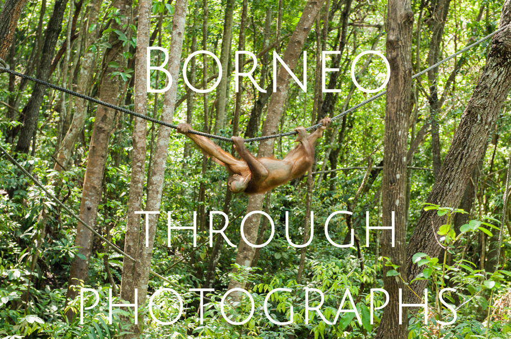 Borneo Photographs