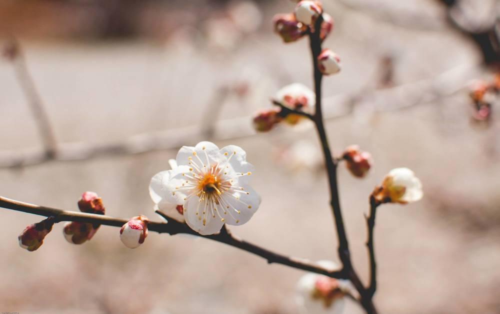 SpringBlossoms3.jpg