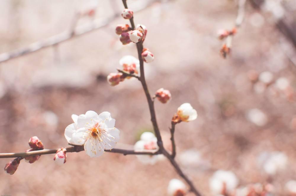 SpringBlossoms2.jpg