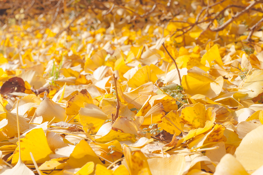 AutumnInKoreaSoenunsaParkFallLeaves (5 of 37).jpg