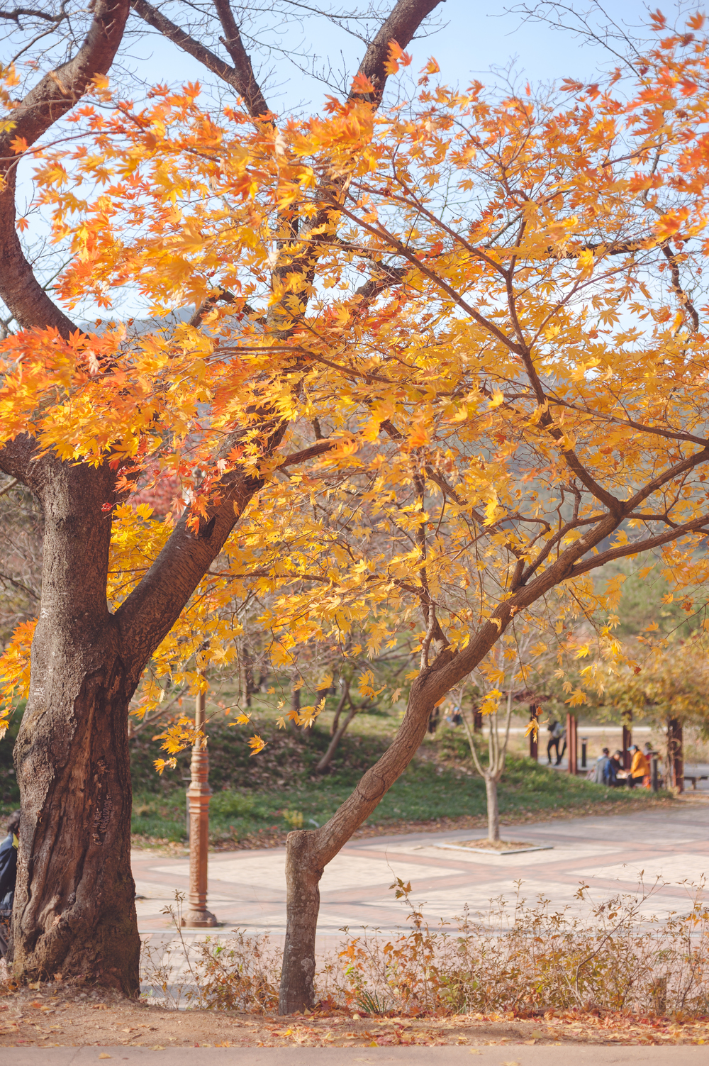 AutumnInKoreaSoenunsaParkFallLeaves (13 of 37).jpg