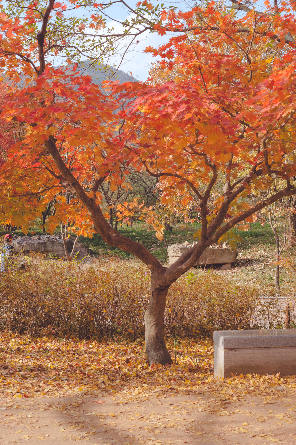 AutumnInKoreaSoenunsaParkFallLeaves (16 of 37).jpg