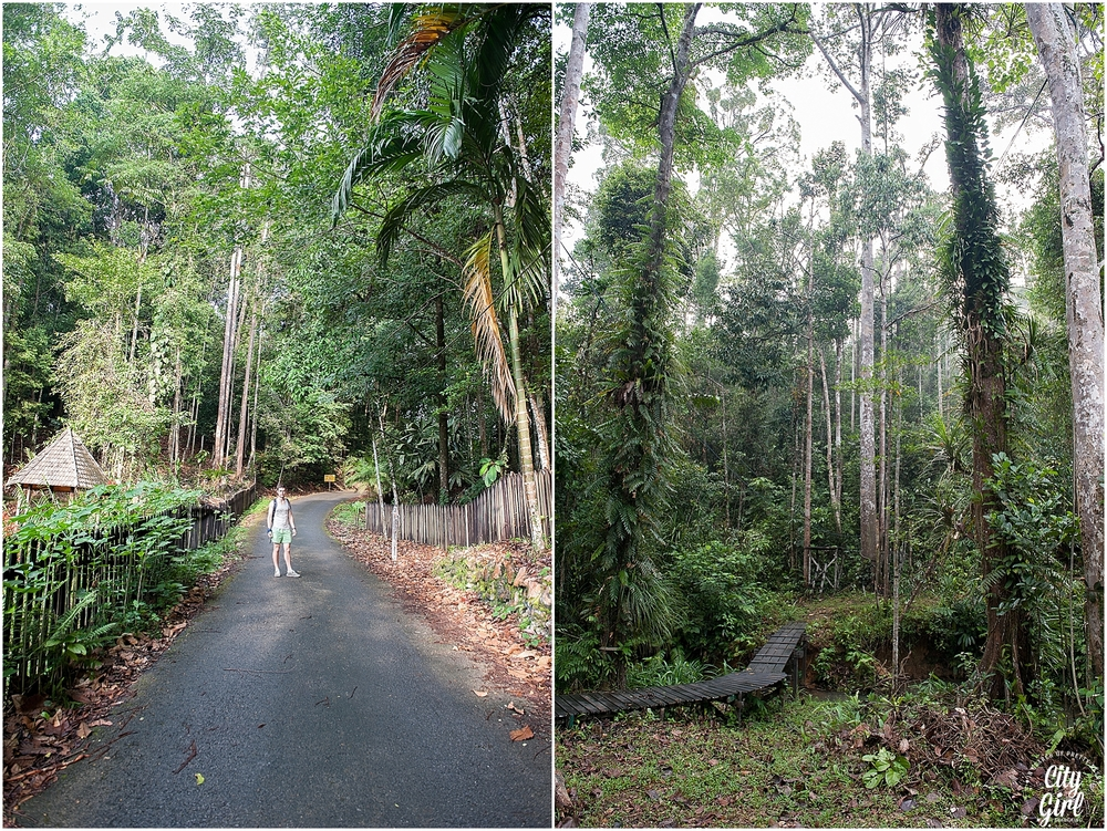 Semenggoh Orangutan Nature Reserve_0103.jpg