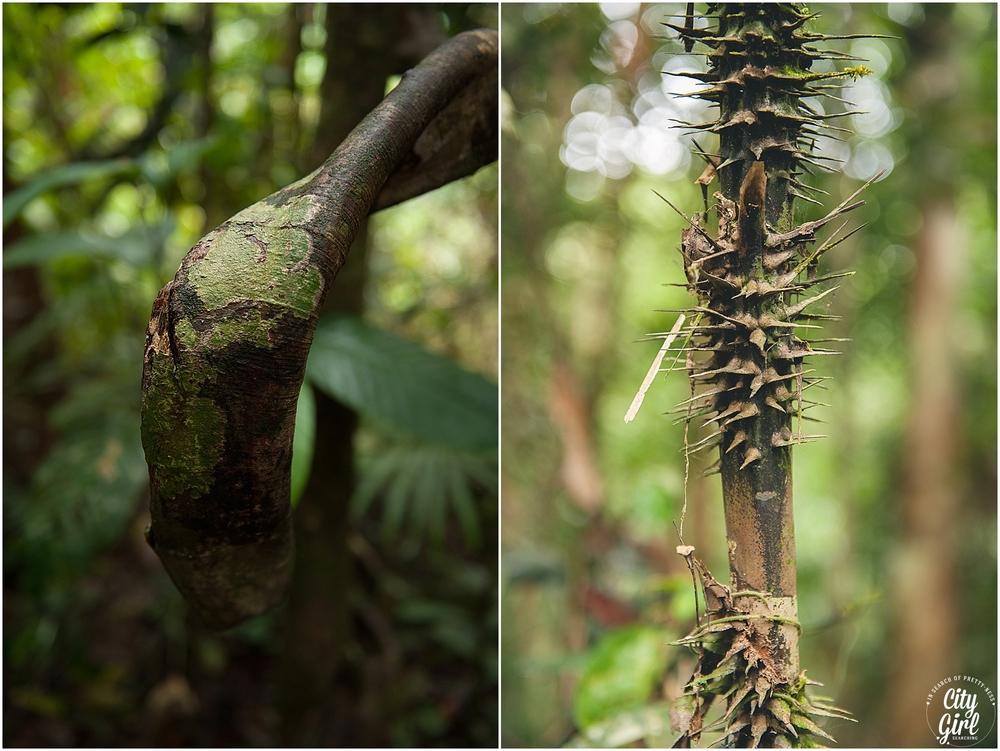 Semenggoh Orangutan Nature Reserve_0108.jpg