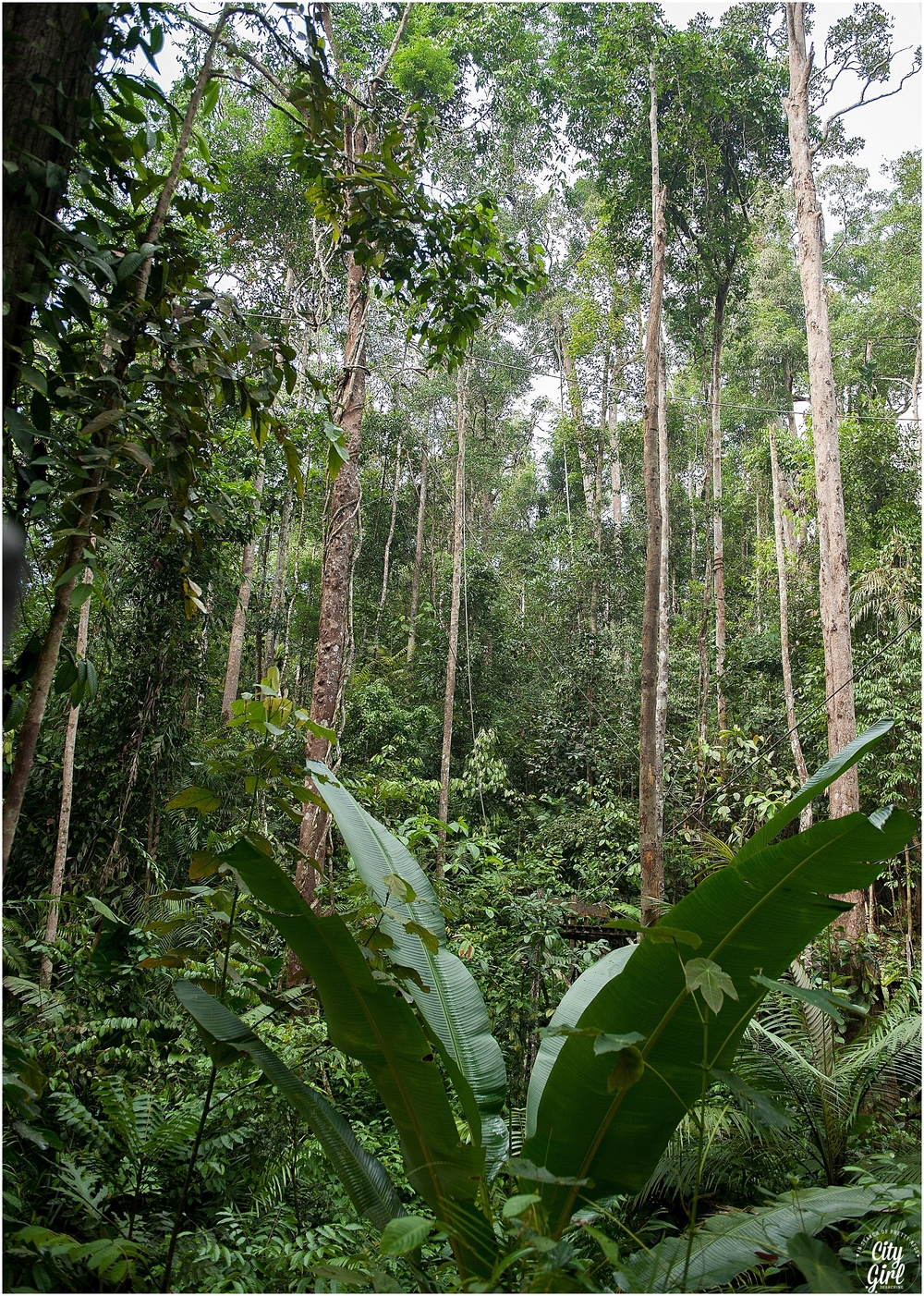 Semenggoh Orangutan Nature Reserve_0109.jpg