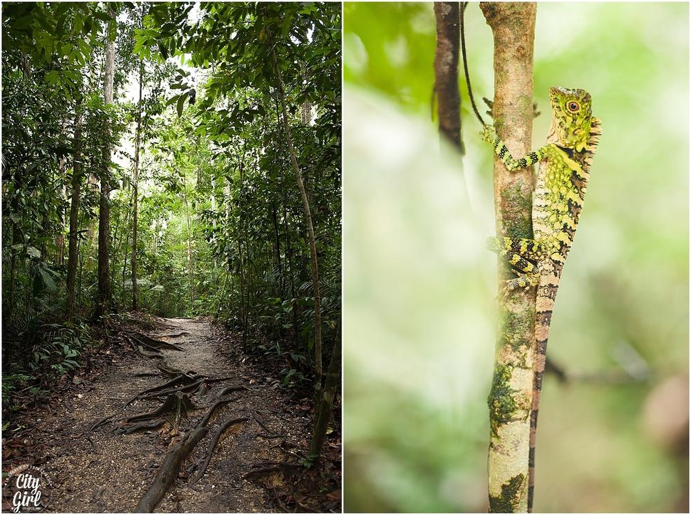 Semenggoh Orangutan Nature Reserve_0107.jpg