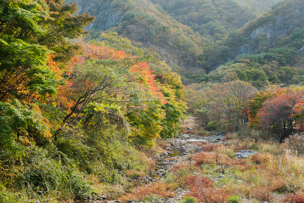 Naejangsan Autumn Fall Leaves Colours South Korea CityGirlSearching Photography (6 of 72).jpg