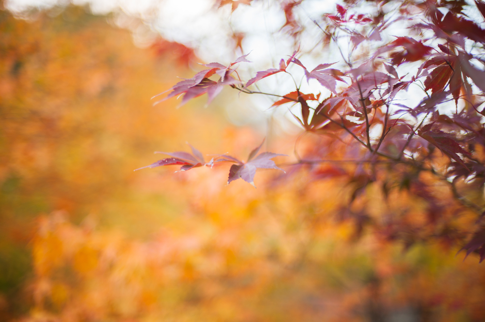 Naejangsan Autumn Fall Leaves Colours South Korea CityGirlSearching Photography (70 of 72).jpg