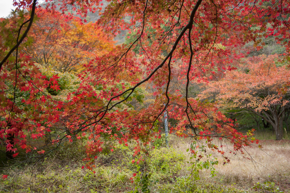Naejangsan Autumn Fall Leaves Colours South Korea CityGirlSearching Photography (47 of 72).jpg
