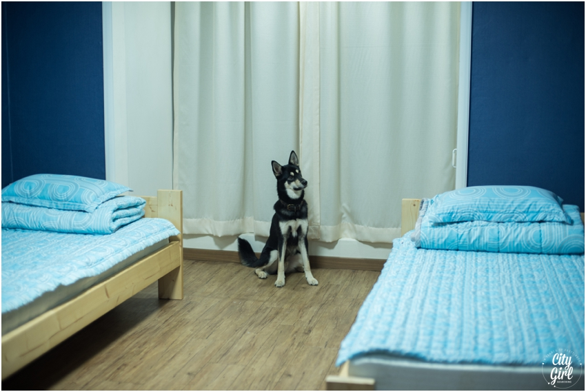 Dog Friendly Accomodation in Gwangju Hertz Guesthouse CityGirlSearching (2 of 34).jpg
