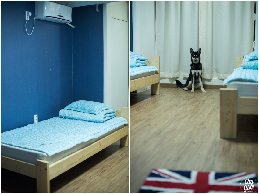 Dog Friendly Accomodation in Gwangju Hertz Guesthouse CityGirlSearching (3 of 34).jpg