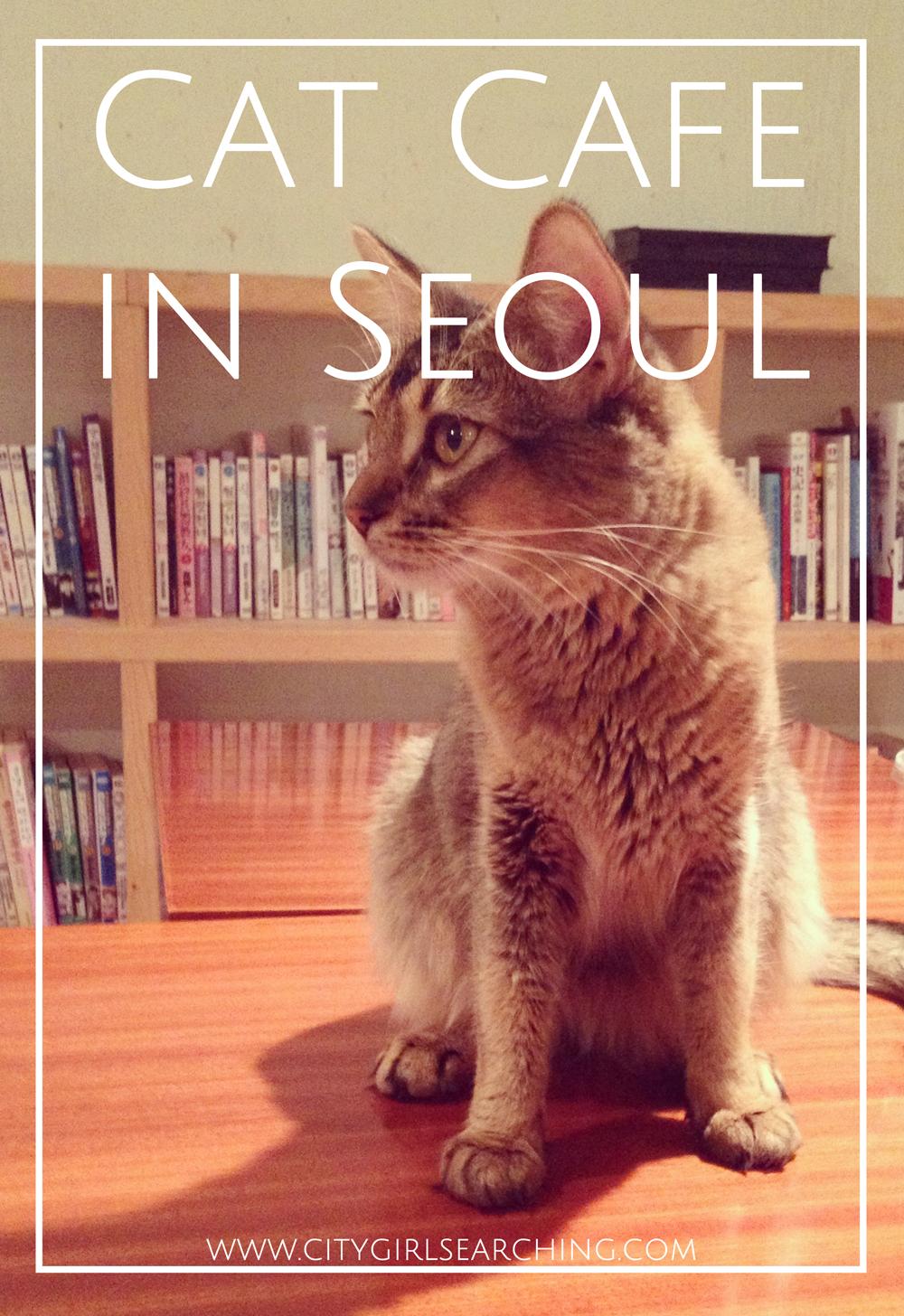 Cat Cafe in Seoul South Korea