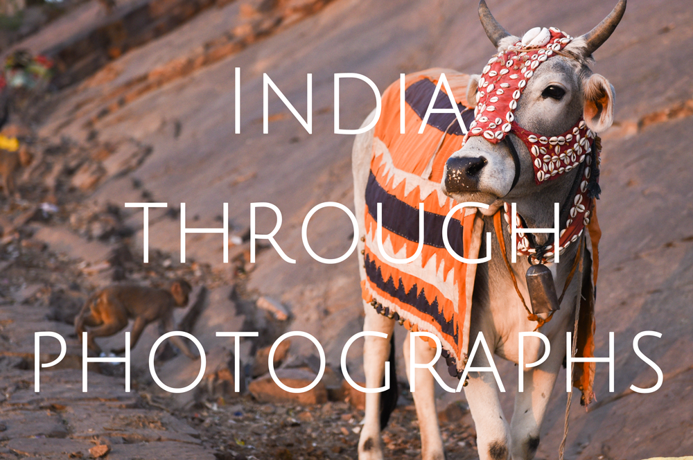 India through photographs - Highlights from our 2 week trip through Goa, Delhi, Agra, Jaipur, Jodhpur, Pushkar & Jaisalmar