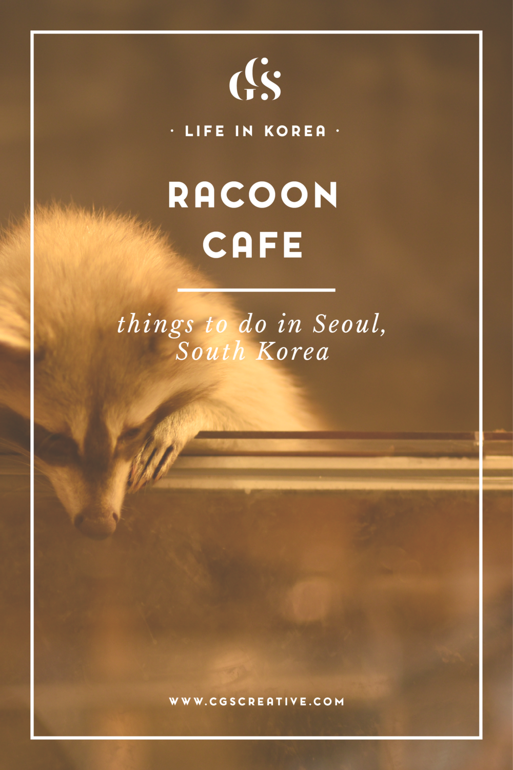 Blind Alley Racoon Cafe Seoul