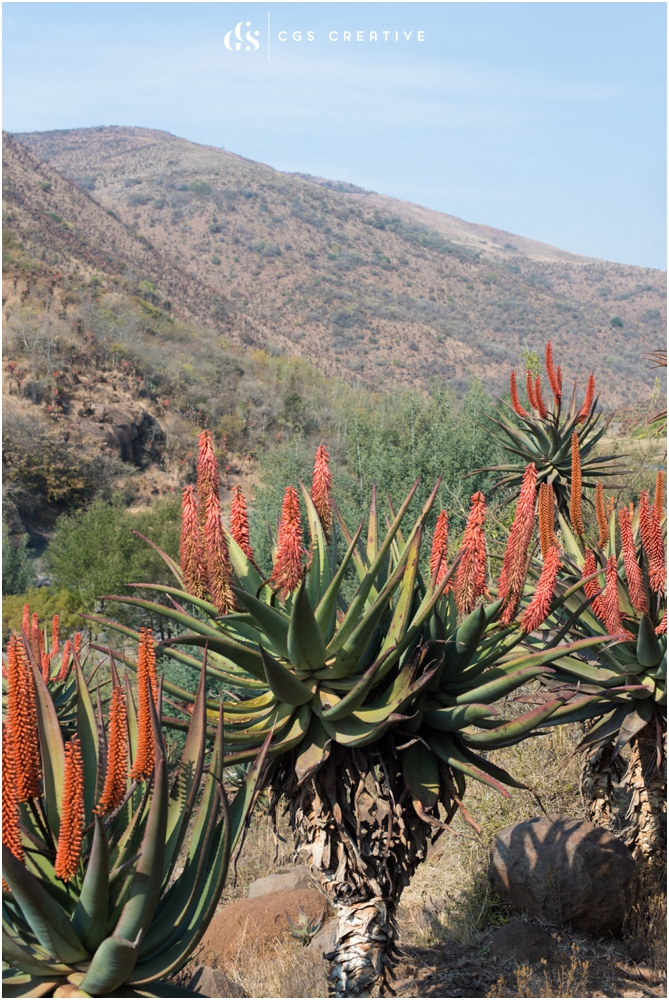 Creighton Steam Train Trip through Aloes by Roxy Hutton CGScreative (59 of 137).jpg