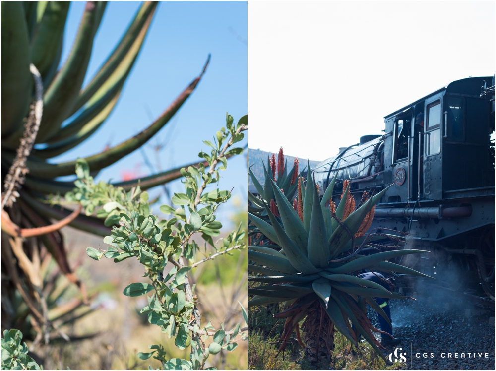 Creighton Steam Train Trip through Aloes by Roxy Hutton CGScreative (101 of 137).jpg