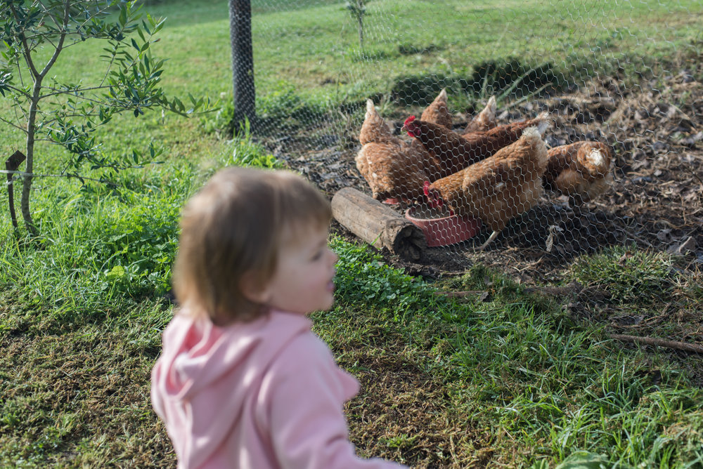 Farmboy CityGirl Pink Chicken Coop Chicken House DIY (22 of 28).jpg
