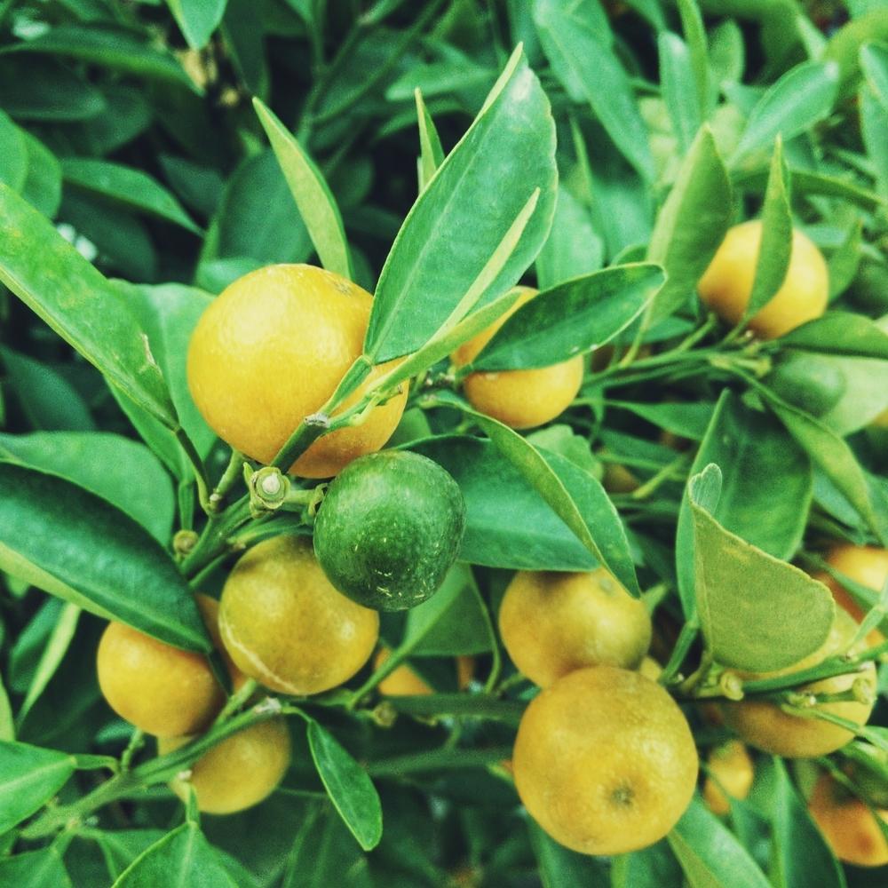 Lemon + Limes