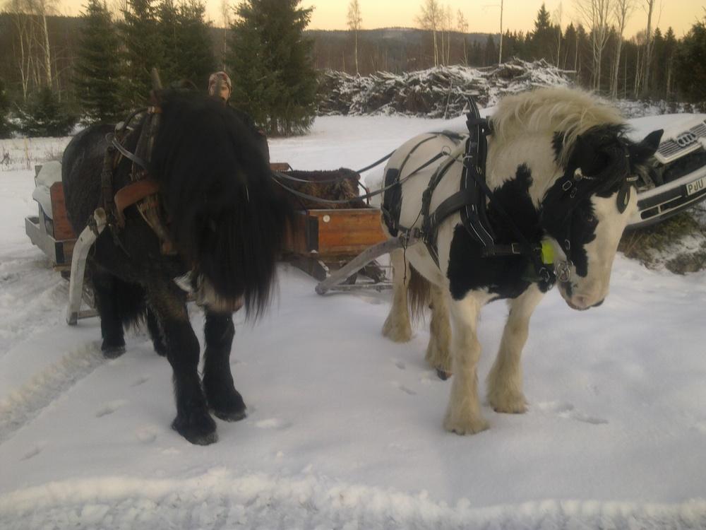 Storskogens Hästturer: Första slädturen!