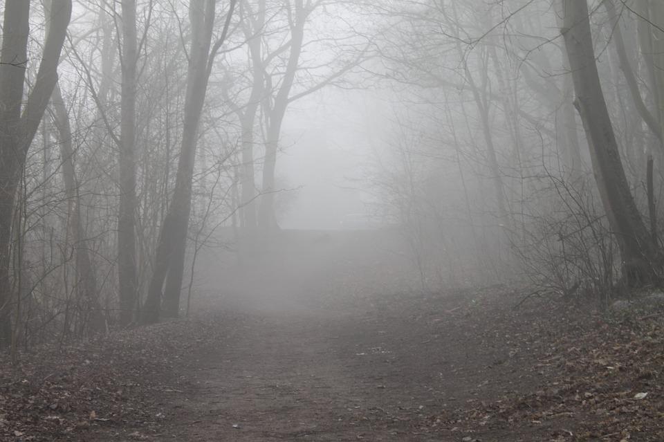 dimma-skog.jpg