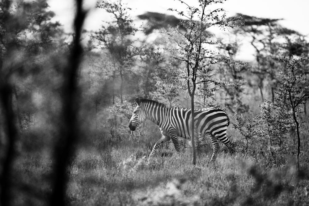 TanzaniaStory-9326.jpg