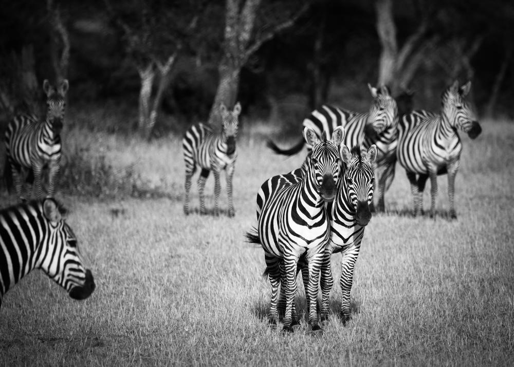 TanzaniaStory-9381.jpg