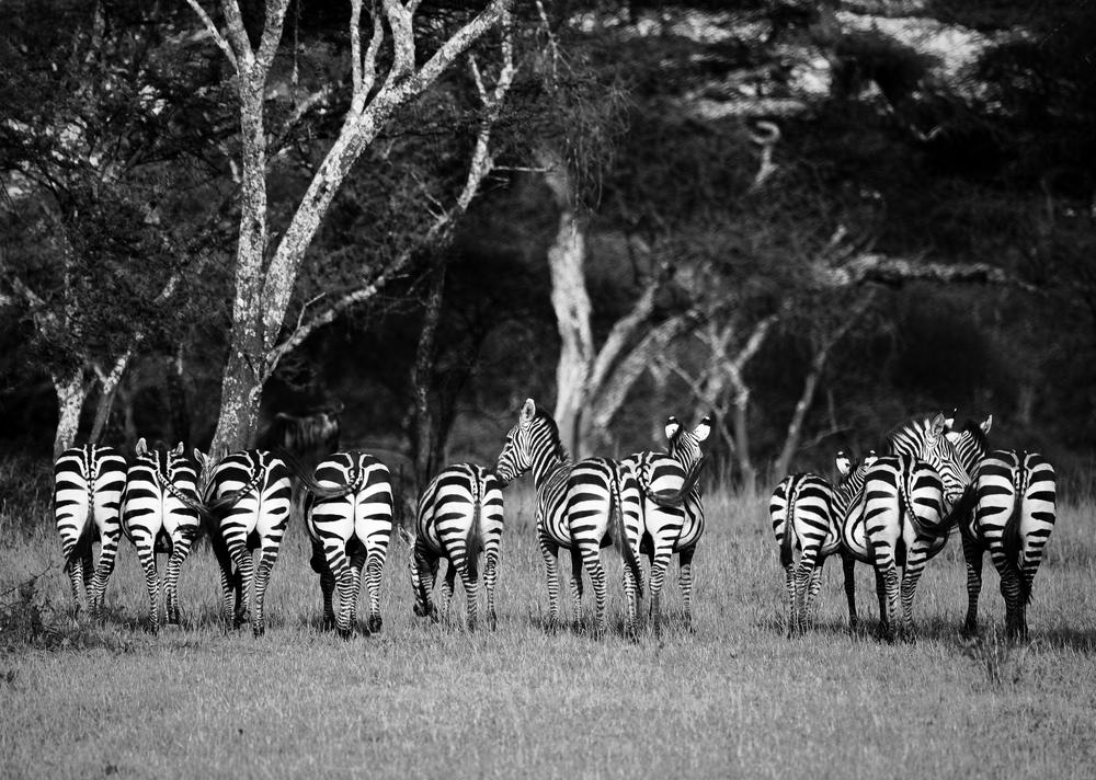 TanzaniaStory-9396.jpg