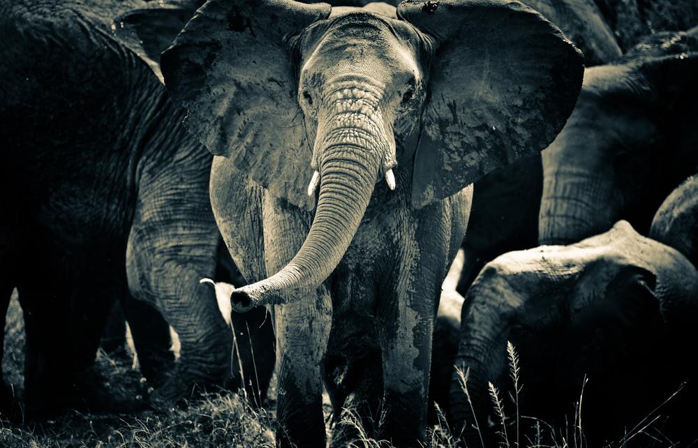 TanzaniaStory-9662.jpg
