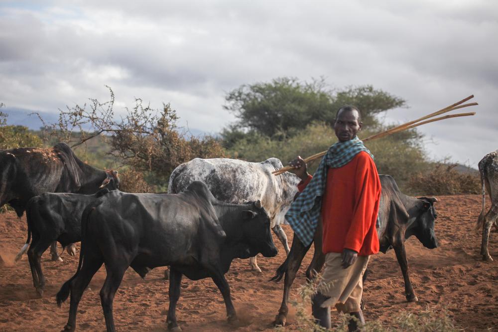 Africa (new)-2.jpg