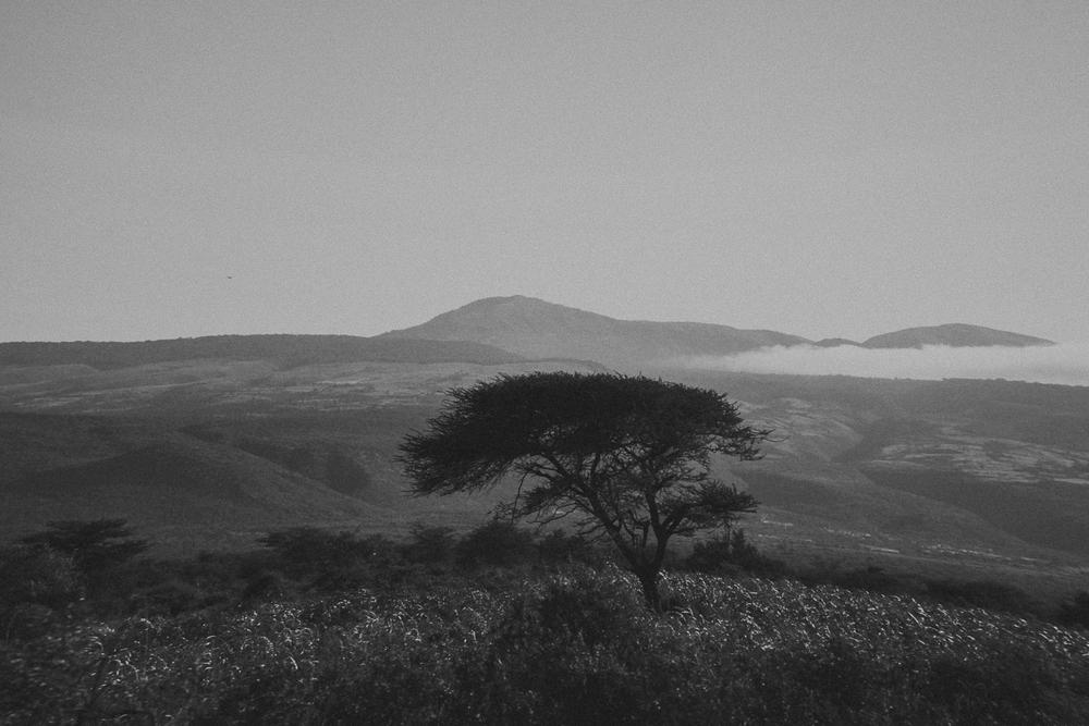 Africa (new).jpg