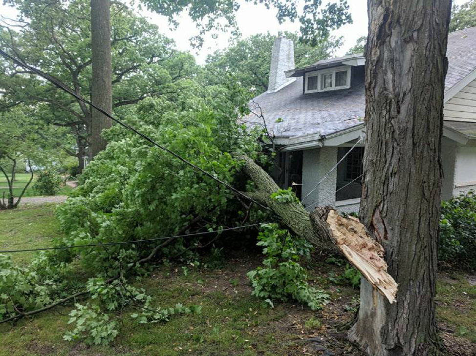 This is the largest branch—along with three live wires, so the electric company is on their way.