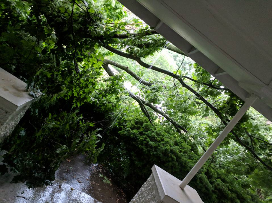 Kind of a wonky angle, but it's still raining. The branch is longer than the front of the house!