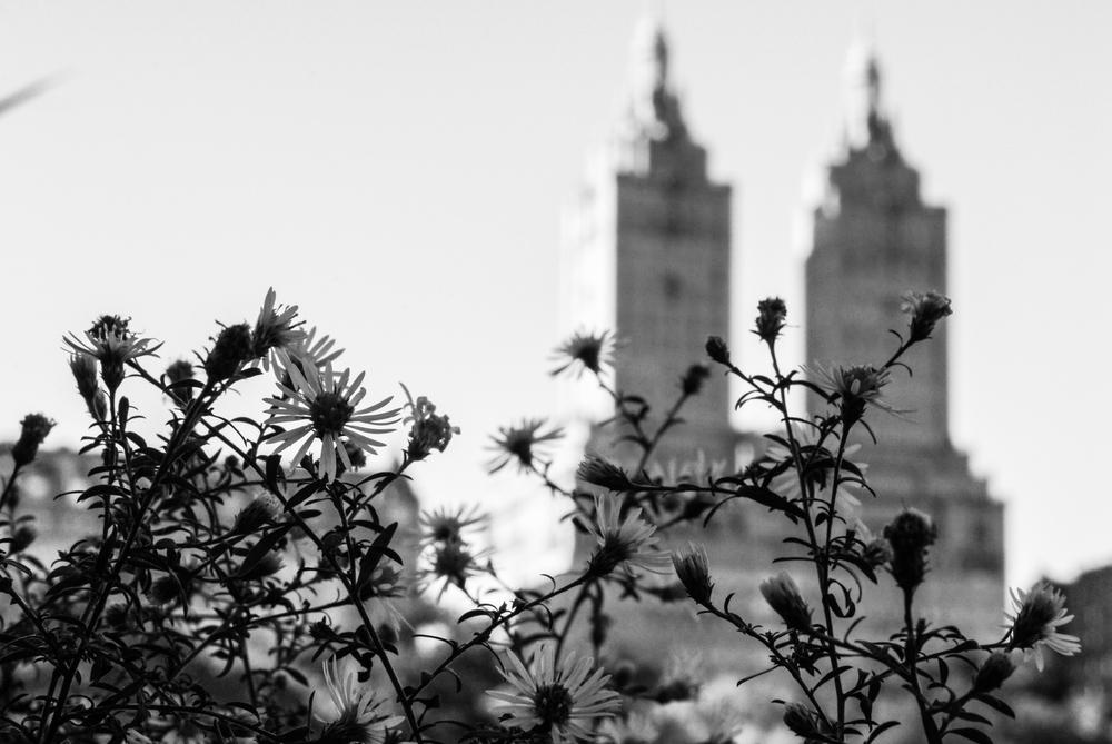 NYC_CityShots-0240.JPG