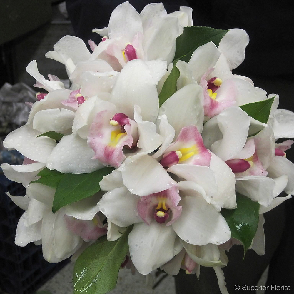 Superior Florist – Weddings – Personal Flowers: Hand tied bouquet of white Cymbidium orchids with pink throat flowers and salal greens.