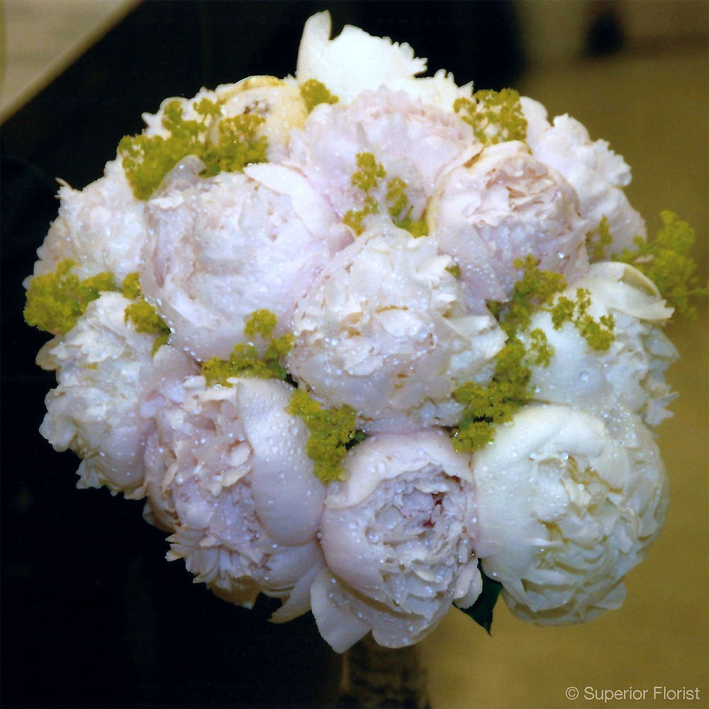 Superior Florist – Weddings – Personal Flowers: Hand tied bouquet of pink Peonies and lady's mantle.
