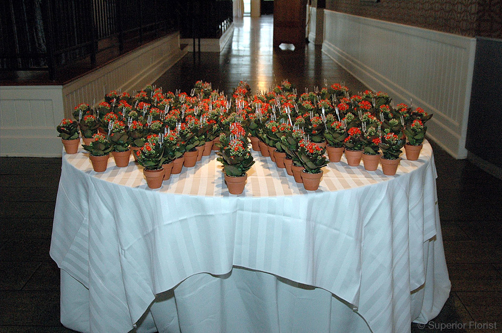 Superior Florist – Weddings – Escort Tables: Miniature Kalanchoe plants in terra cotta pots, which served as wedding favors. (Variety of plants available.)