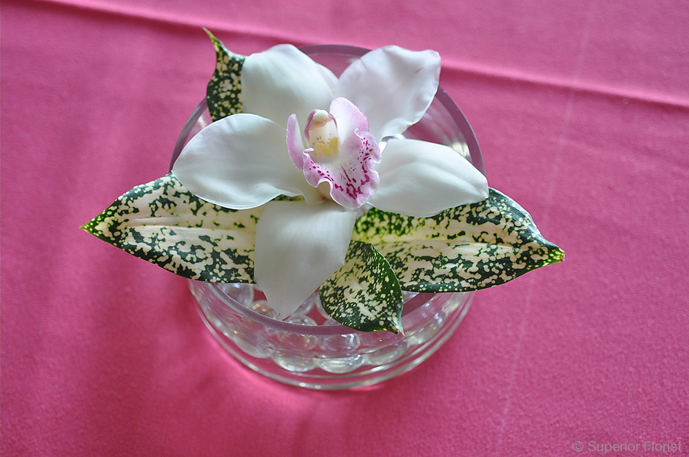 Superior Florist – Cocktail Tables: Floral arrangement of floating Cymbidiums in a low, glass bowl.