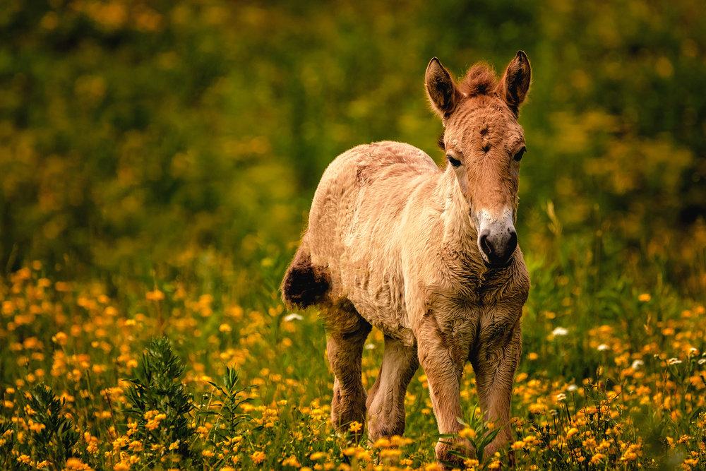 asian horse.jpg