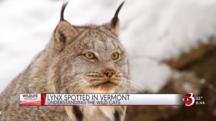 Lynx via WCAX