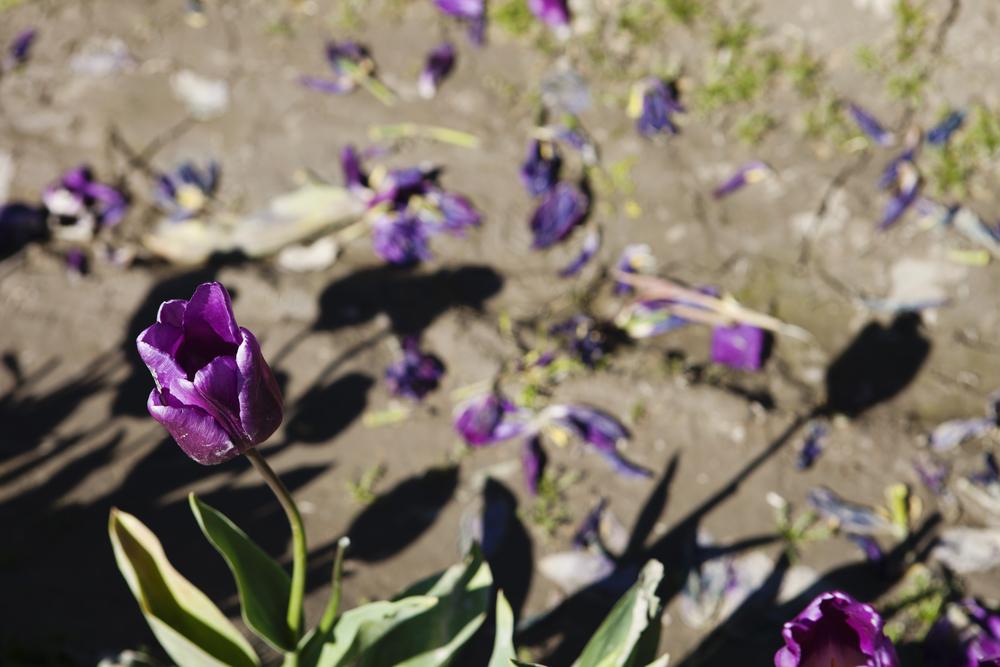 Purple2IMG_3900.jpg