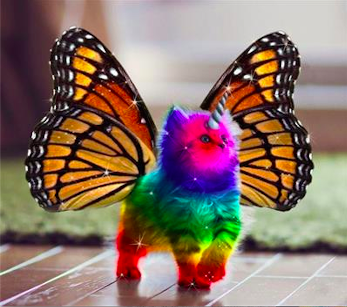rainbow unicorn kitten.png
