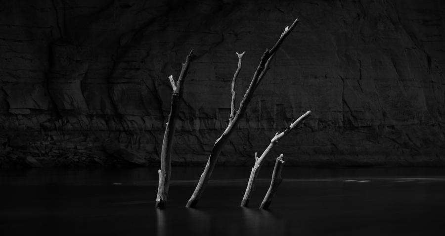 TREE TOPS-LAKE POWELL-P001243