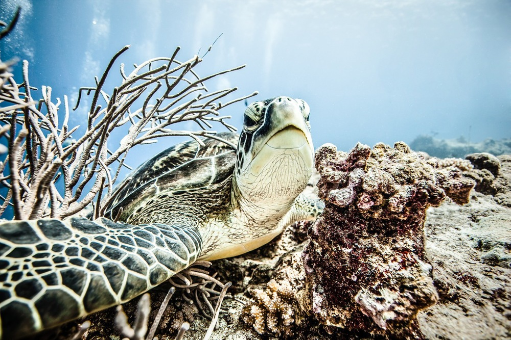 Turtle 2.jpeg