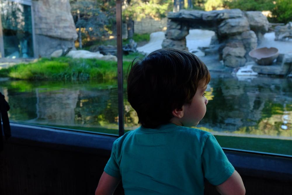 Jackson checks out the Polar Bears at the San Diego zoo