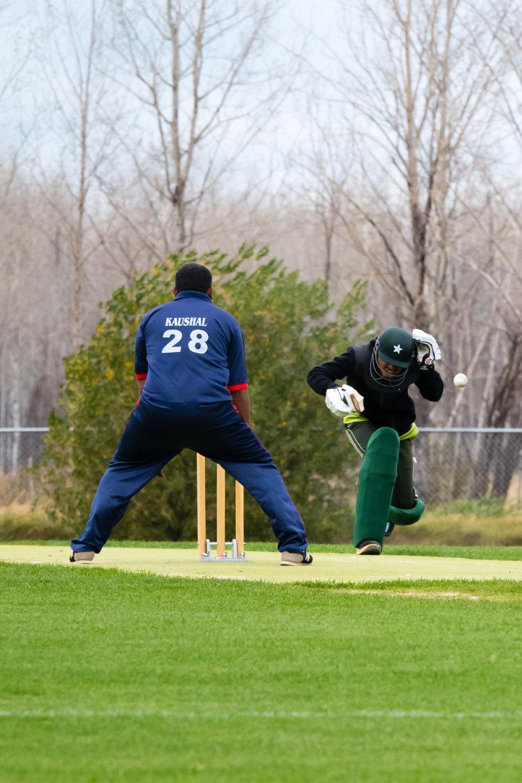 Cricket-1288.jpg
