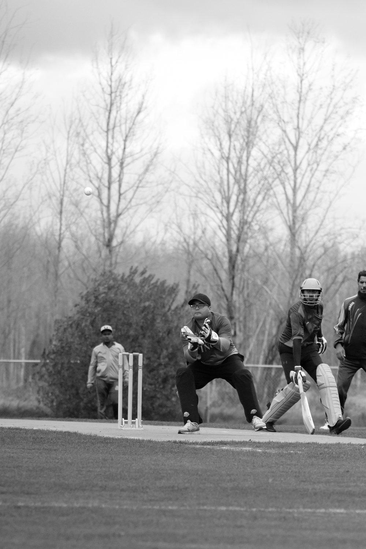 Cricket-1425.jpg