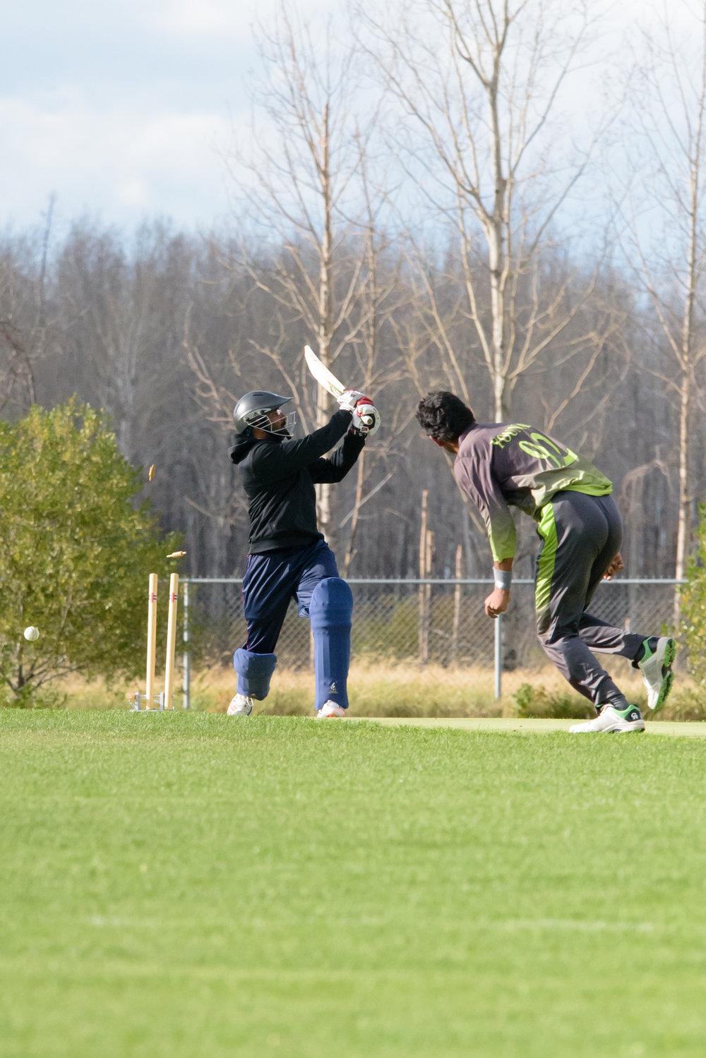 Cricket-2385.jpg