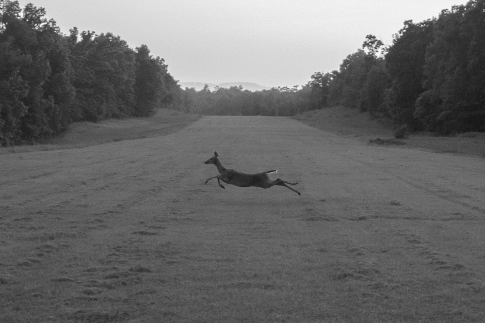 Caught this fella darting across the grass airport runway in Bull Shoals, AR.