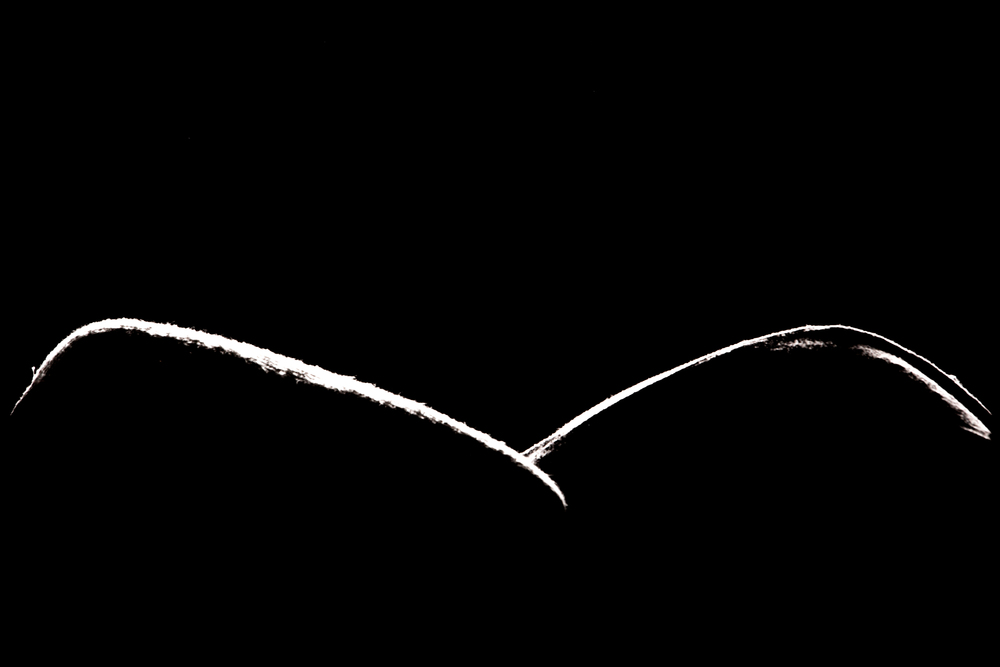 Title: Forme 04 Medium:Archival Pigment Print Dimension: 20 × 30 in (50.8 cm × 76.2 cm) Edition: 1 of 2, with 1 AP