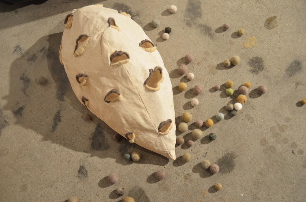 Untitled (Seed Series)